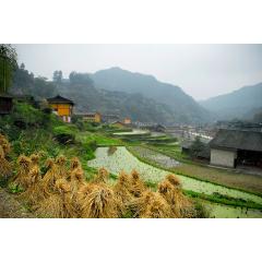 Xijiang Village Farms 2