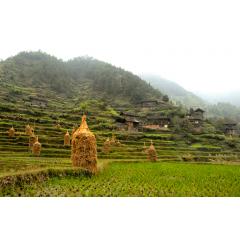Xijiang Village Farms